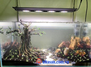 Fossil wood stone for aquariums